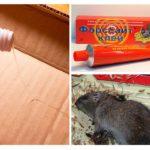 चूहा गोंद
