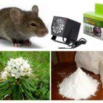 चूहों से निपटने के तरीके