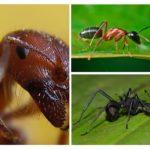 चींटी बंद करो