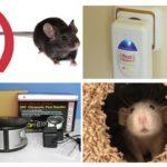 चूहों से पुनर्विक्रेता स्थापित करें
