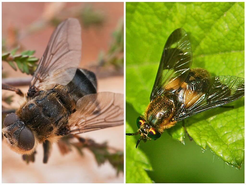Gadfly और gadfly