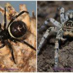 Crimea के मकड़ियों